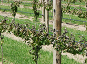 Protect your wines from frost with Climate Consulting